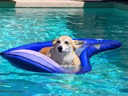 Premium OP: Dog Days of Summer